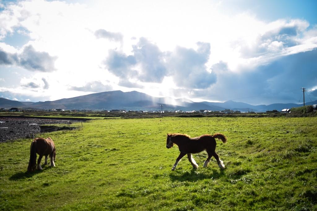 Ireland, 4 must try Irish road trips, Ballycurrane